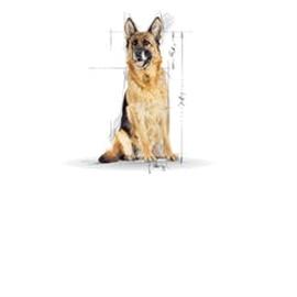 ROYAL CANIN MAXI AGEING +8 15 KG #1 - RC2454801