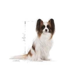 ROYAL CANIN X-SMAL ADULT 8+ - 0.500 KGS - RC312206590